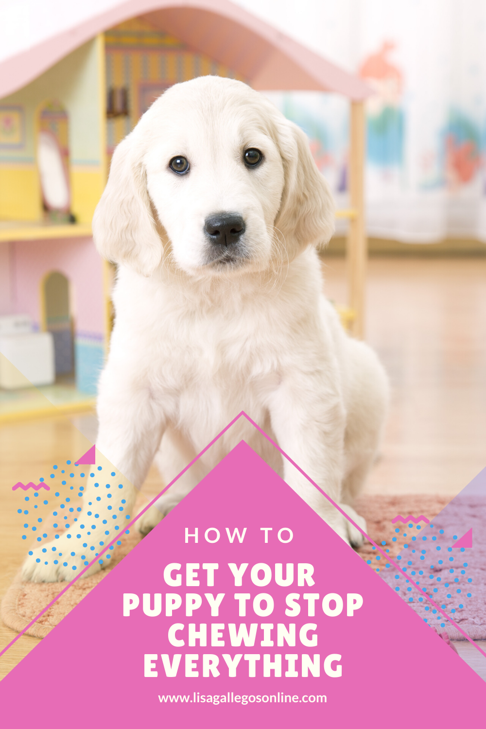 How To Get Your Puppy To Stop Chewing Everything In 2020 Puppy Training Puppies Dog Training Advice