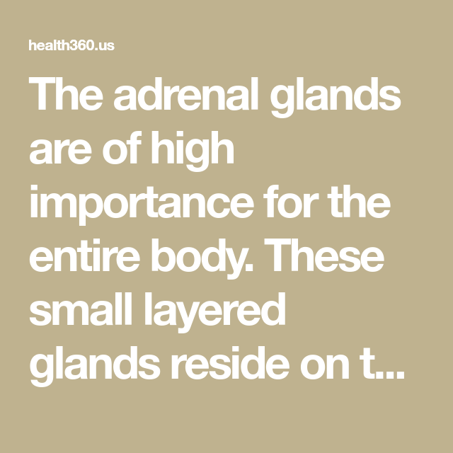 The adrenal glands are of high importance for the entire body. These small layered glands reside on top of your kidneys. In fact, they are important for healthy kidney function and the production of hormones – particularly stress hormones and sex hormones (estrogen and testosterone). The adrenal glands release several hormones, like steroids and adrenaline.…
