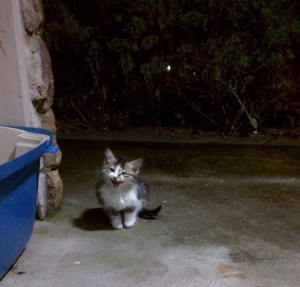 Stray Cat Comes To Couple Meowing For Help On Stormy Night Cat