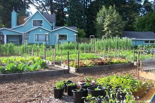 Love Apple Farms Veggie Beds..2006..They are a HUGE
