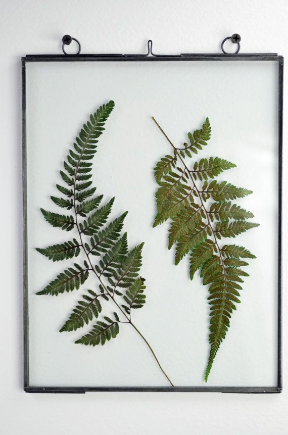 Pressed Fern // Glass Frame // Wall Art // Wall Decor // Pressed ...