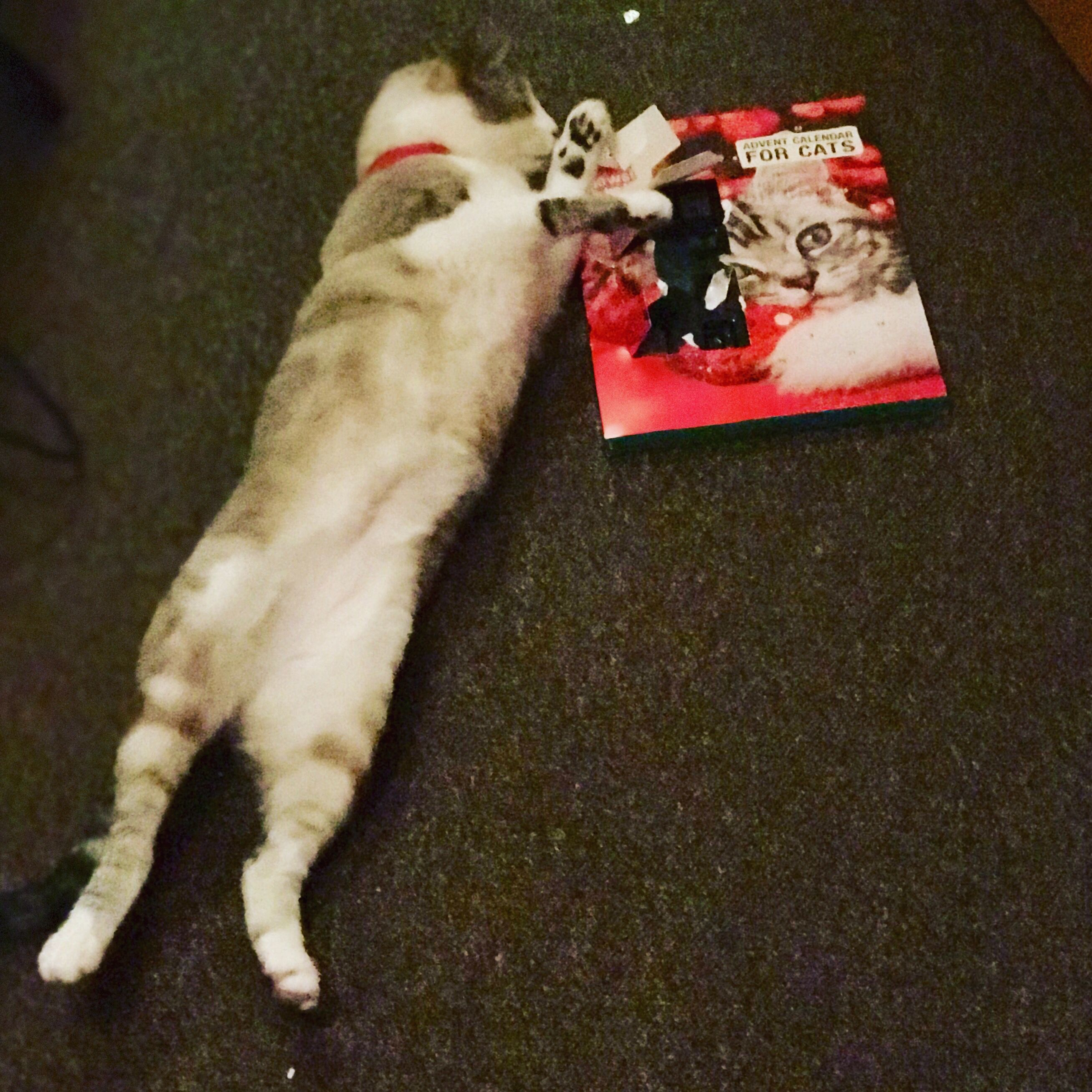 Bubbly Bubbles is obsessed with the Cats advent calendar