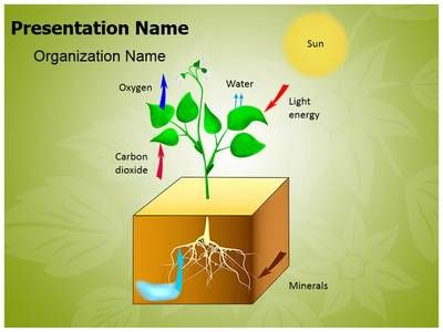 Plant Schematic Photosynthesis Powerpoint Template Is One Of The