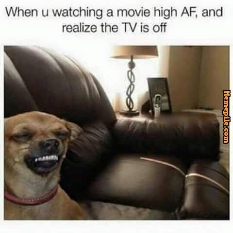c18439953d4293ed518bab8f9bbb10cc when you watching a movie high af, and realize the tv is off,dog