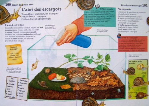 escargots et langages en maternelle petite moyenne et grande sections animaux sciences. Black Bedroom Furniture Sets. Home Design Ideas