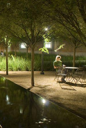 Rice University - night garden