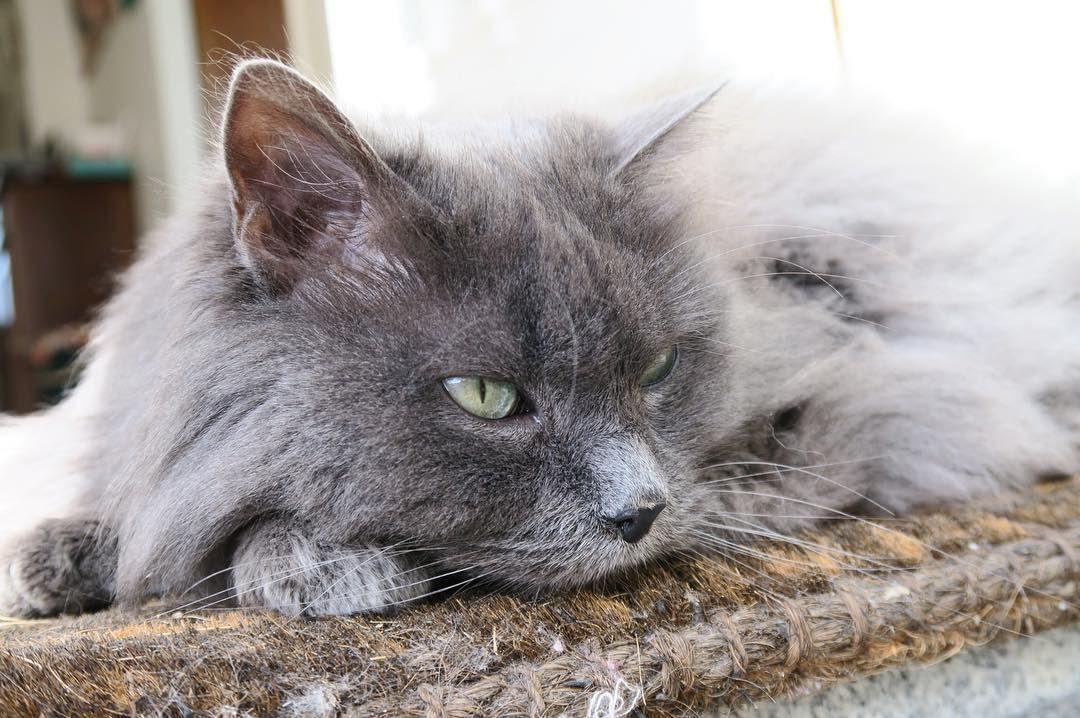 La petite minette profite elle aussi du soleil. 🐱☀️ Je viens de réaliser  que le printemps c'est lundi, il faut que je me dépêche … | Green  lifestyle, Animals, Cats