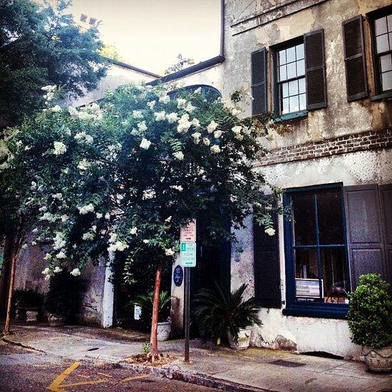 Charleston South Carolina Crepe Myrtle Trees Myrtle Tree Charleston