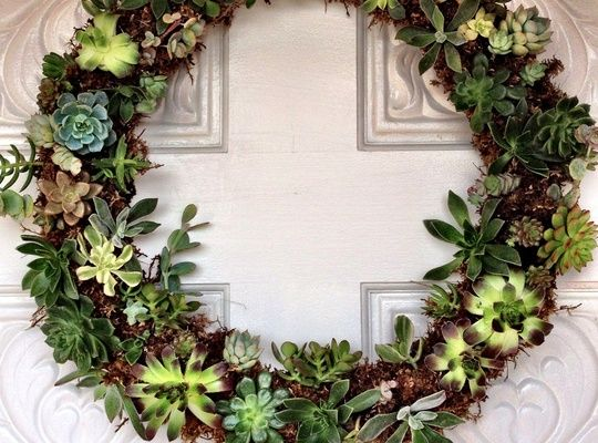 A succulent wreath can be enjoyed year round. They are fun and easy to make!