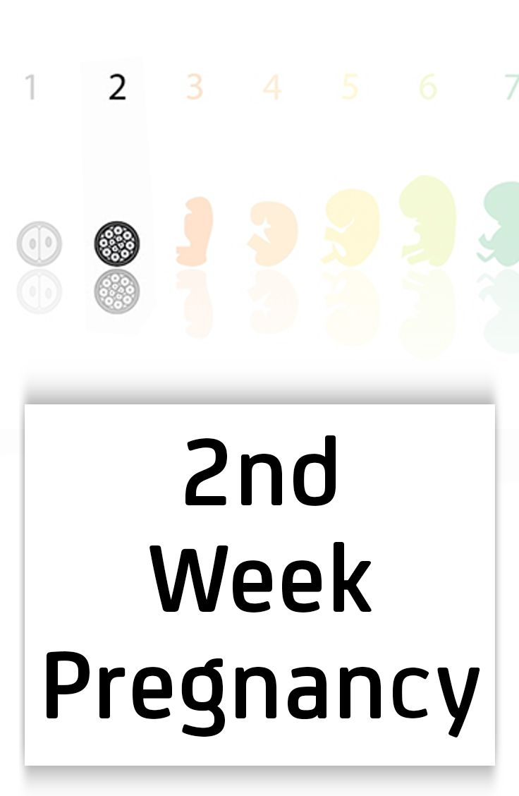 2nd Week Pregnancy Symptoms Baby Development Tips And Body