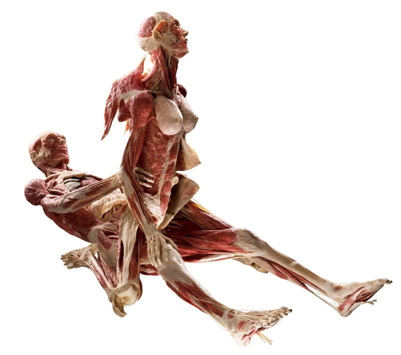 Body Worlds\' Exhibition By Gunther Von Hagens | Pinterest | Anatomy ...