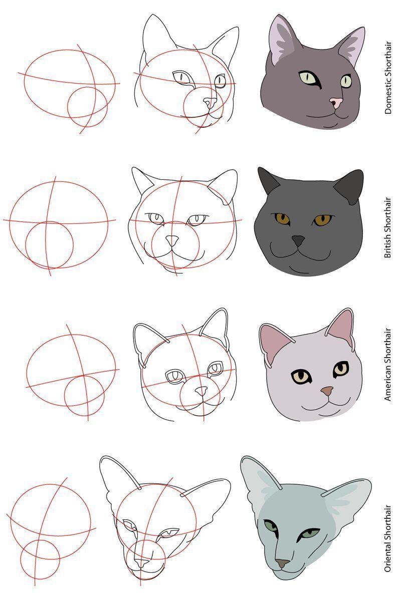 10 Staggering Drawing The Human Figure Ideas 10 Drawing Figure Human Ideas Staggering The Bocetos De Animales Dibujo De Animales Como Dibujar Un Gato