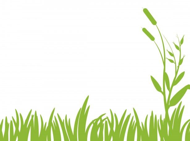 Green Grass Clipart Free Stock Photo Public Domain Pictures Grass Clipart Grass Silhouette Grass Painting