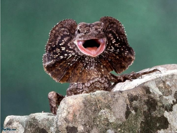 poisonous lizard | Fri...