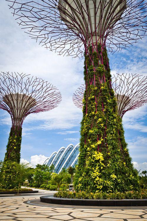 c18709dabcda928c7fea5515965f3b7a - Supertree Grove Gardens By The Bay Singapore