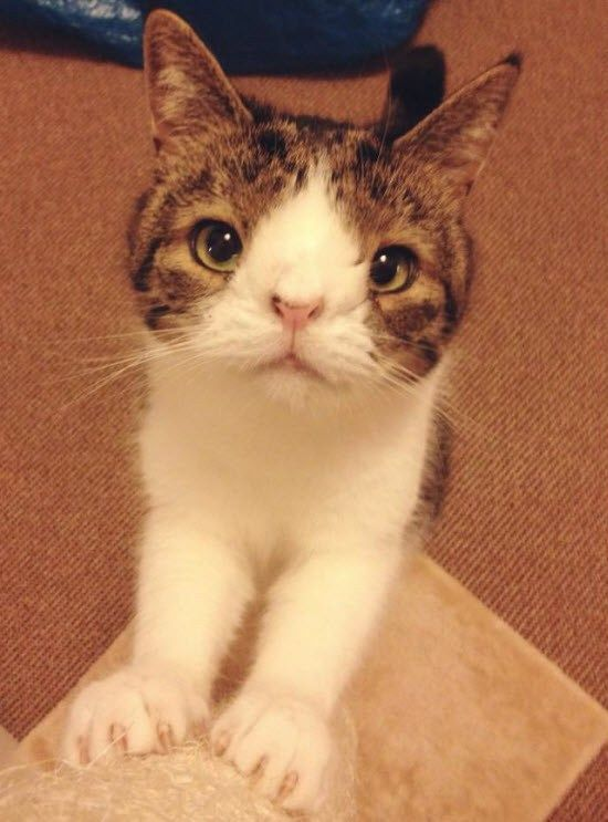 Meet Monty A Very Special Kitty With Images Cute Cats Monty