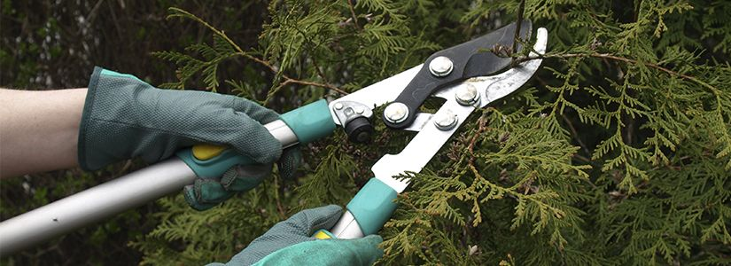 Selecting The Right Pruning Tools Pruning Tools Prune