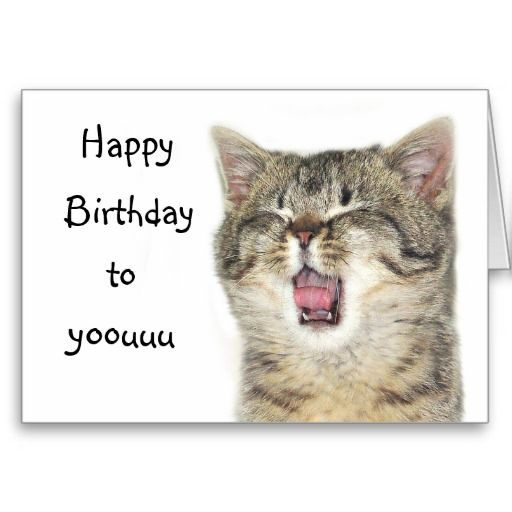 Happy Birthday Kitten Card Cats Tabby Singing Lol Cards Zazzle