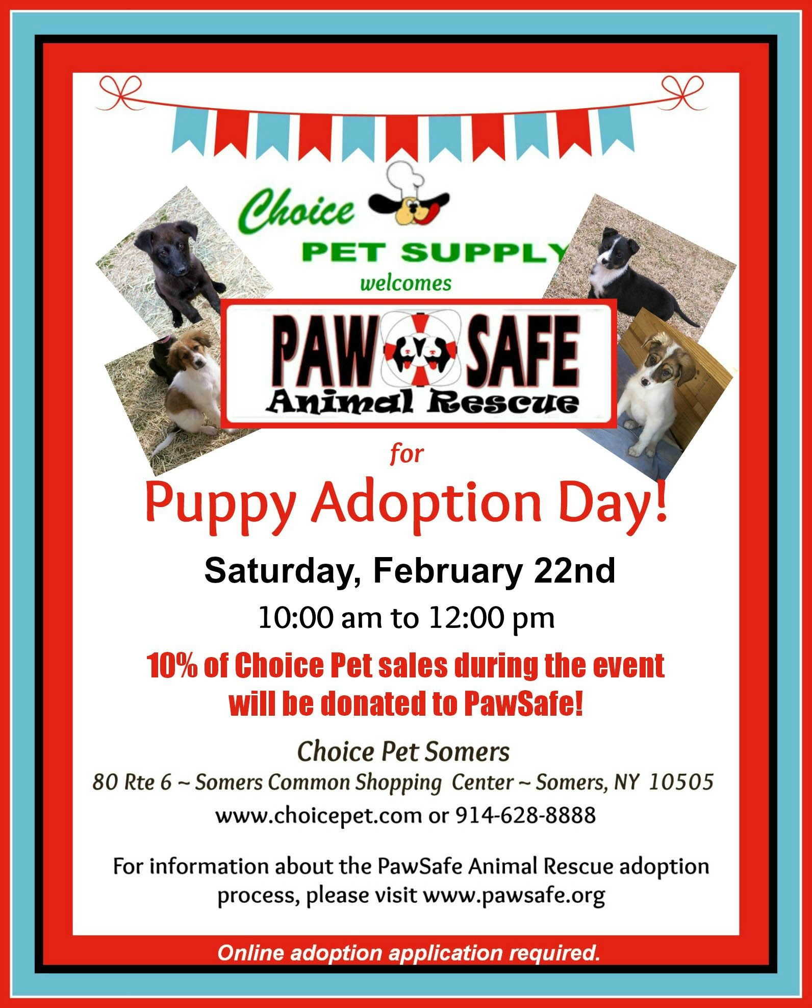 We Love Pawsafe With Images Puppy Adoption Adoption Day