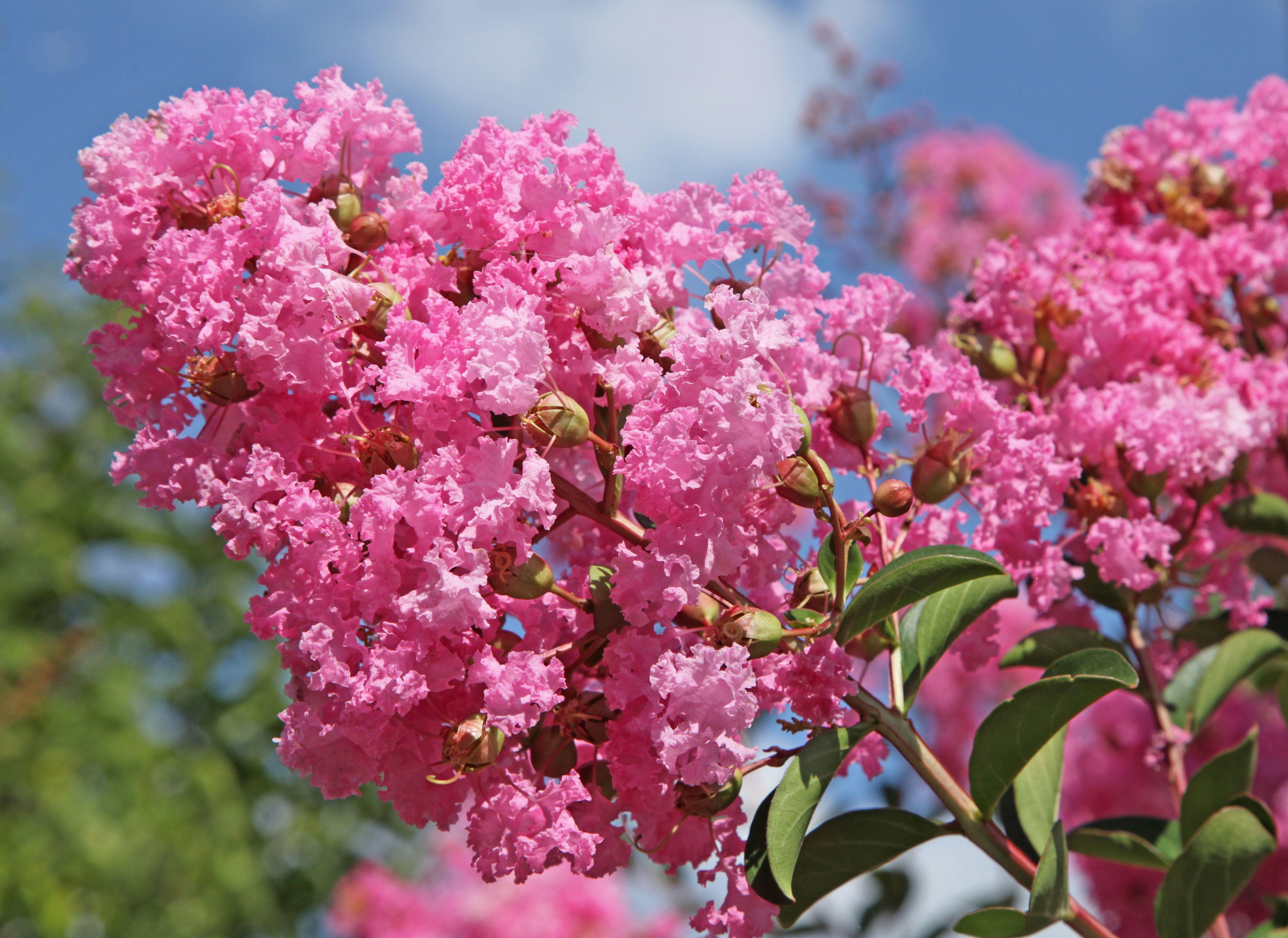 Arbres Et Fleurs Waziers Articles Funraires Adresse Avis
