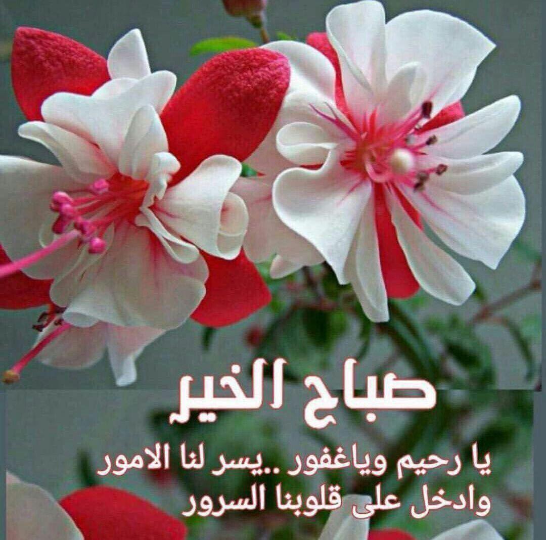 Pin By Nada Z On صباح الخير Good Morning Beautiful Morning Messages Good Morning Arabic Beautiful Flowers Wallpapers