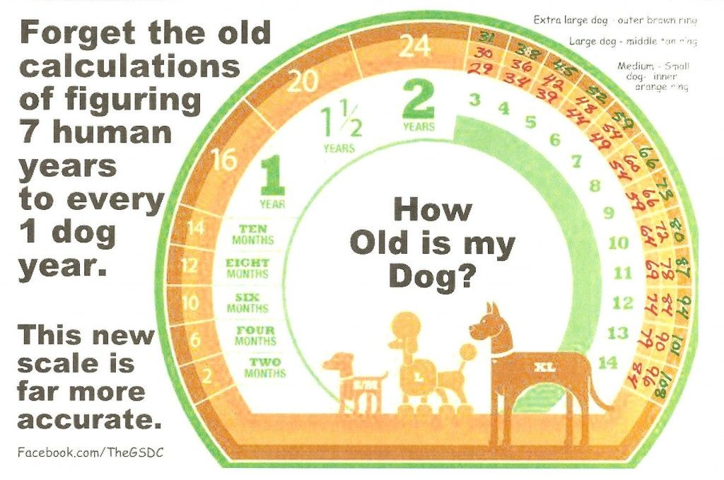 Accurate Canine Age Chart Inspirational cats, Dog years