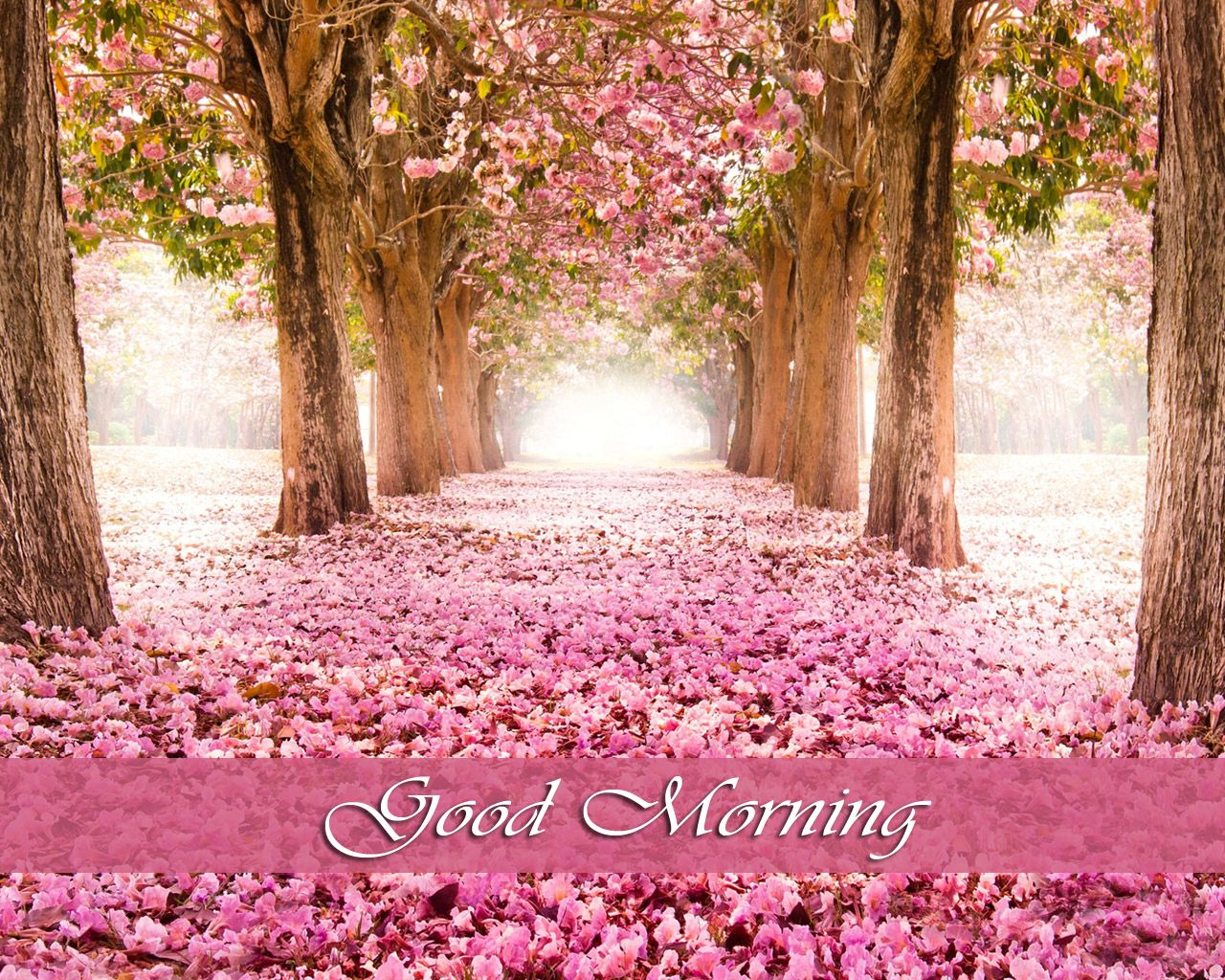 Good Morning Images Download Cherry Blossom Wallpaper Spring Wallpaper Pink Trees