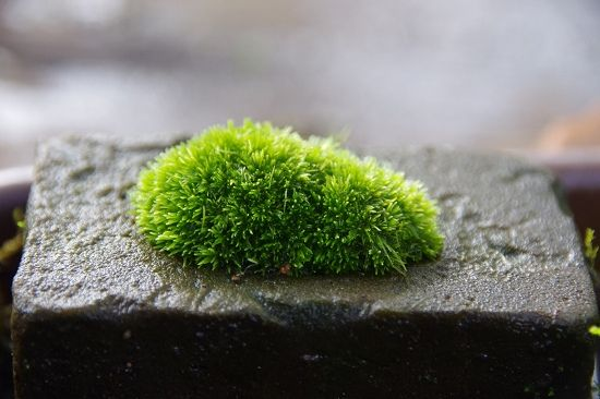 Moss kusamono on concrete pot