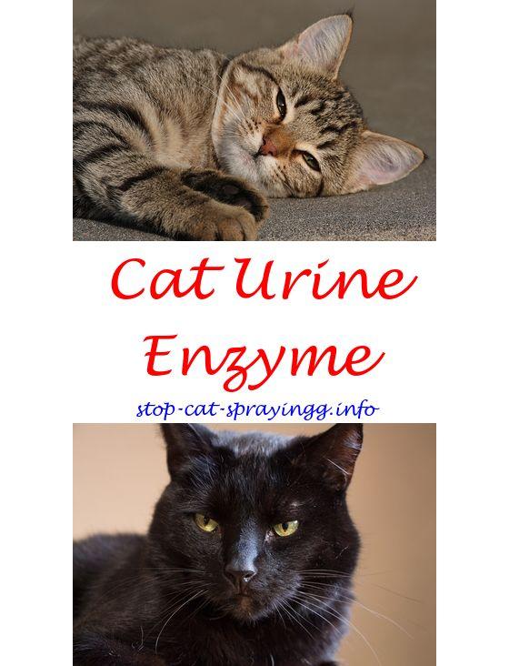 Steel Boat Plans Cats, Cat urine smells, Cat urine