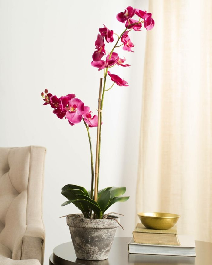 Orchid Care Instructions And Useful Information About The Queen Of