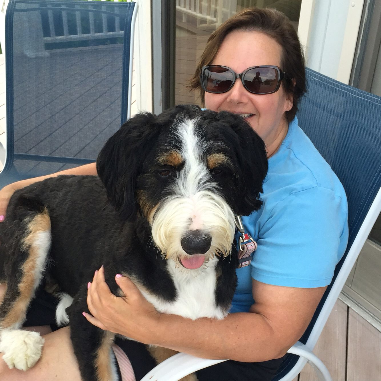 Pin By Sharon Lichten Stenger On Puck Our Bernedoodle Bernese Mountain Dog Poodle Lap Dogs Bernedoodle