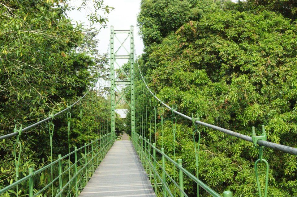 La Selva Costa Rica Adventure Places Ive Been Places