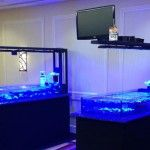 CORAL Video: Frag Swap Set Up with HighDefCorals