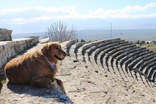 「石灰棚」のブログ記事一覧-トルコから石灰棚を眺めながら生活する日記