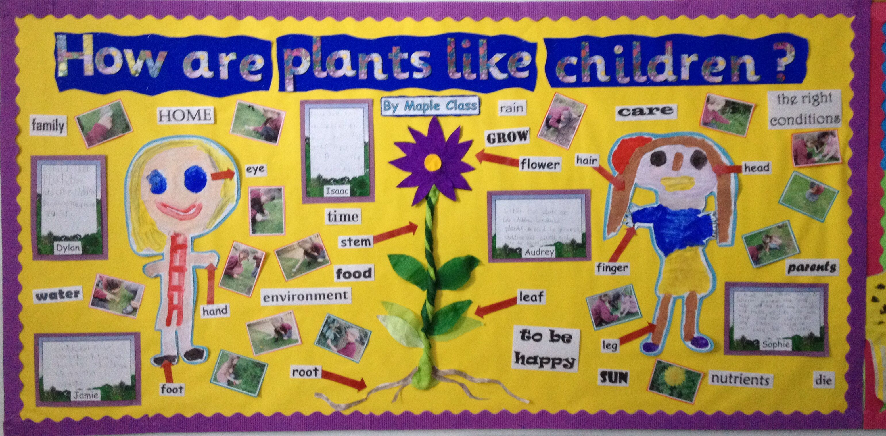 How Are Plants Like Children My Year 1 Display Great For Science And Pshe Lovely Writing