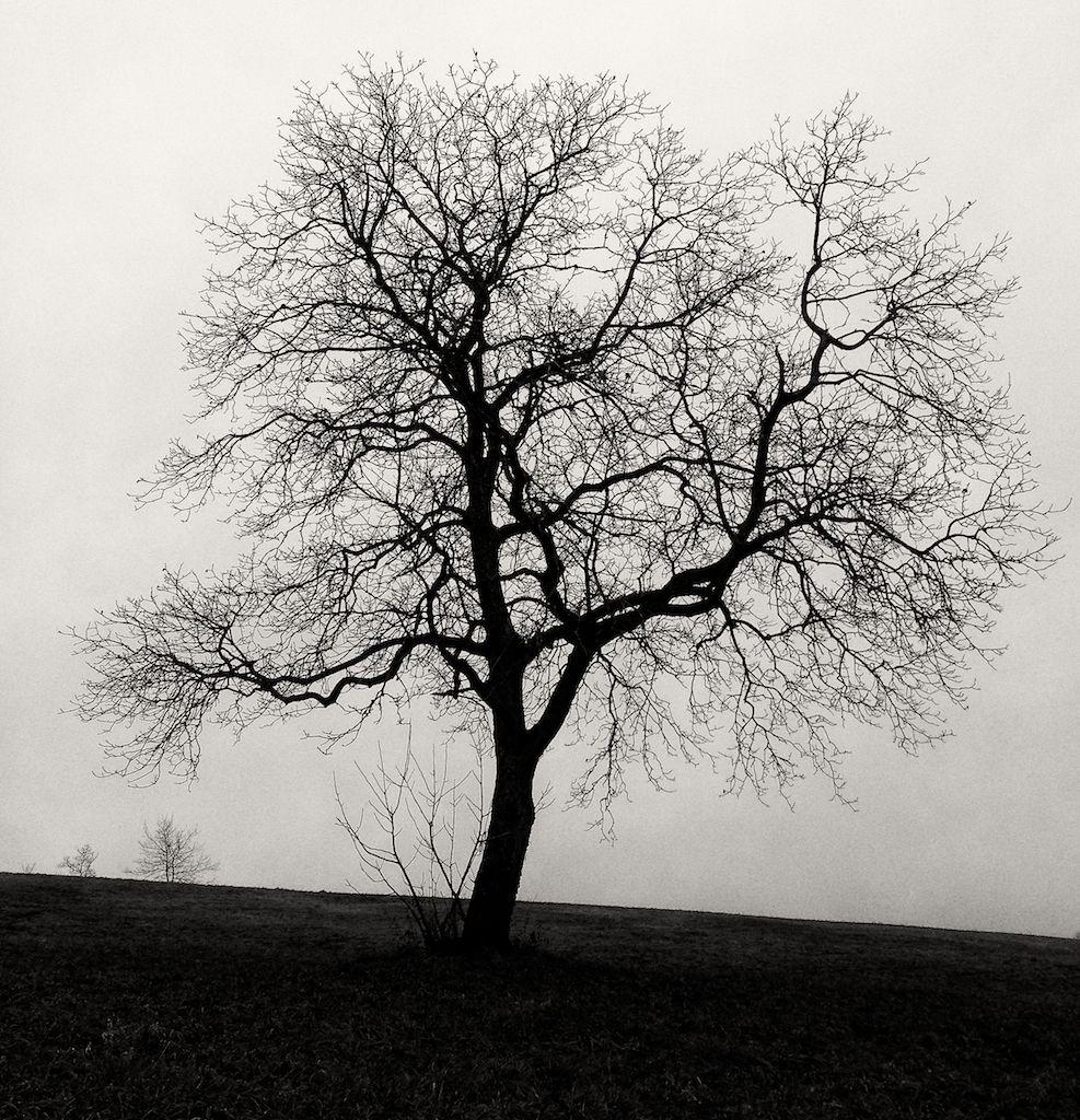 Arbre En Noir Et Blanc Arbre En 2019 Tree Illustration Tree