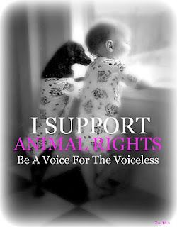 The Voice For The Voiceless: How to Solicit Donations for an Animal Rescue Group