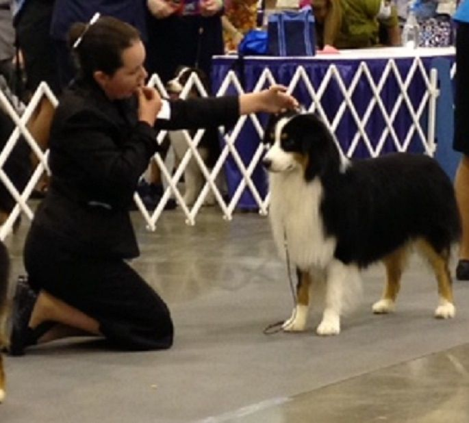 Winning Winners Dog At The Houston Reliant Center Show 5 Point