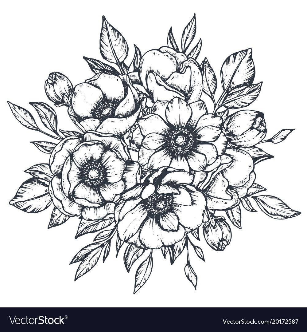 Floral Composition Of Hand Drawn Anemone Vector Image On Vectorstock In 2020 Anemone Flower Vector Flowers How To Draw Hands