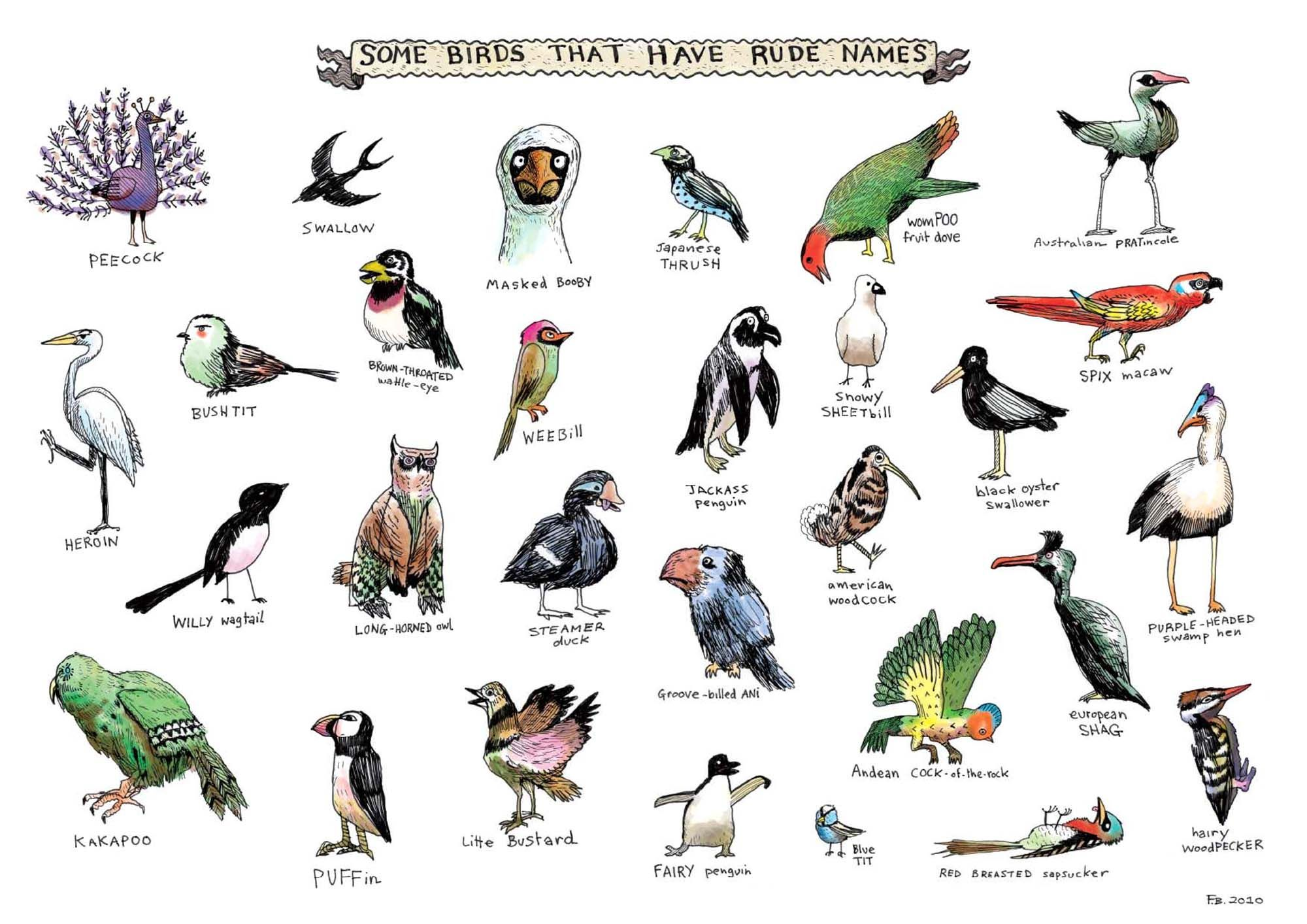 Birds Pictures With Names Showing