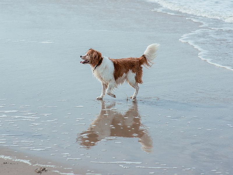 5 Dog Friendly Cities In San Diego County Dog Friends Dog Beach Pet Friendly Stores