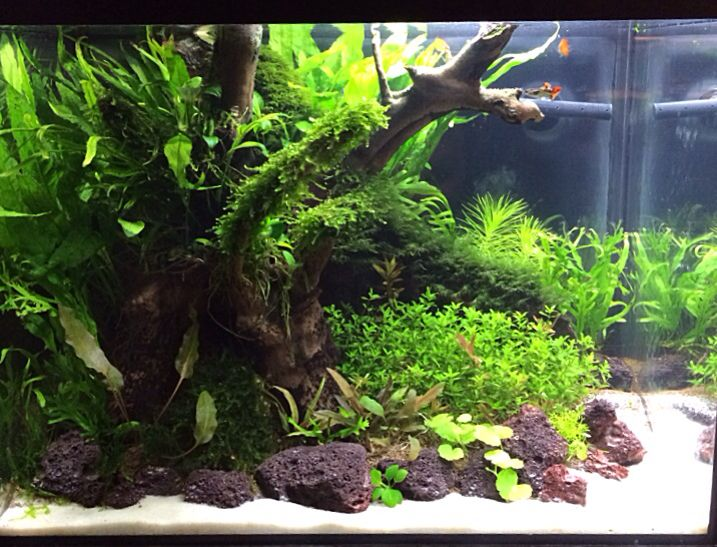 Nice aquascape- small tank | Aquarium garden, Aquascape ...