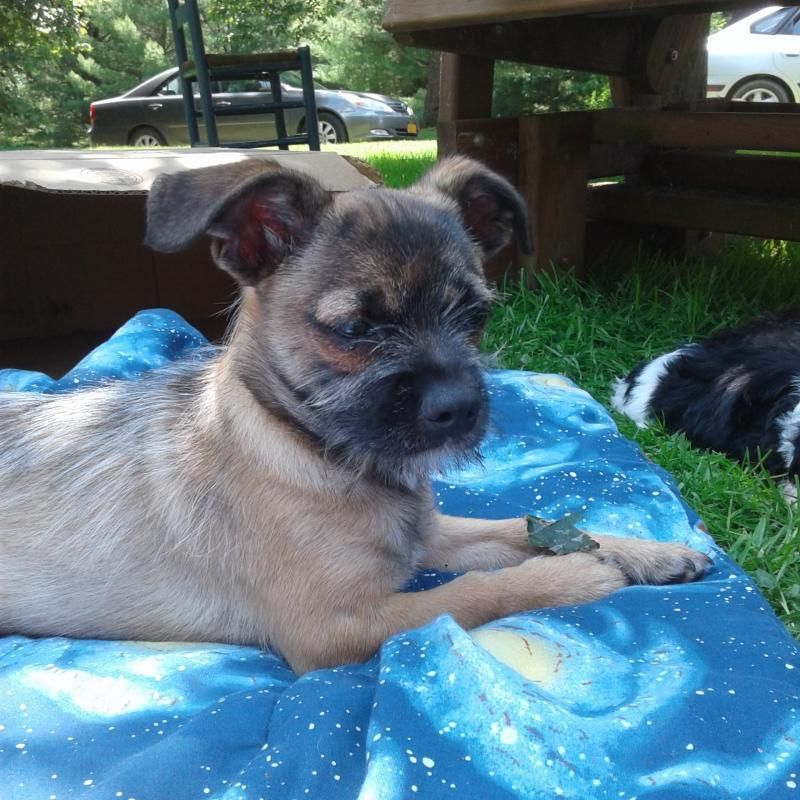 Shih Tzu Puppies For Adoption In Ny 2021