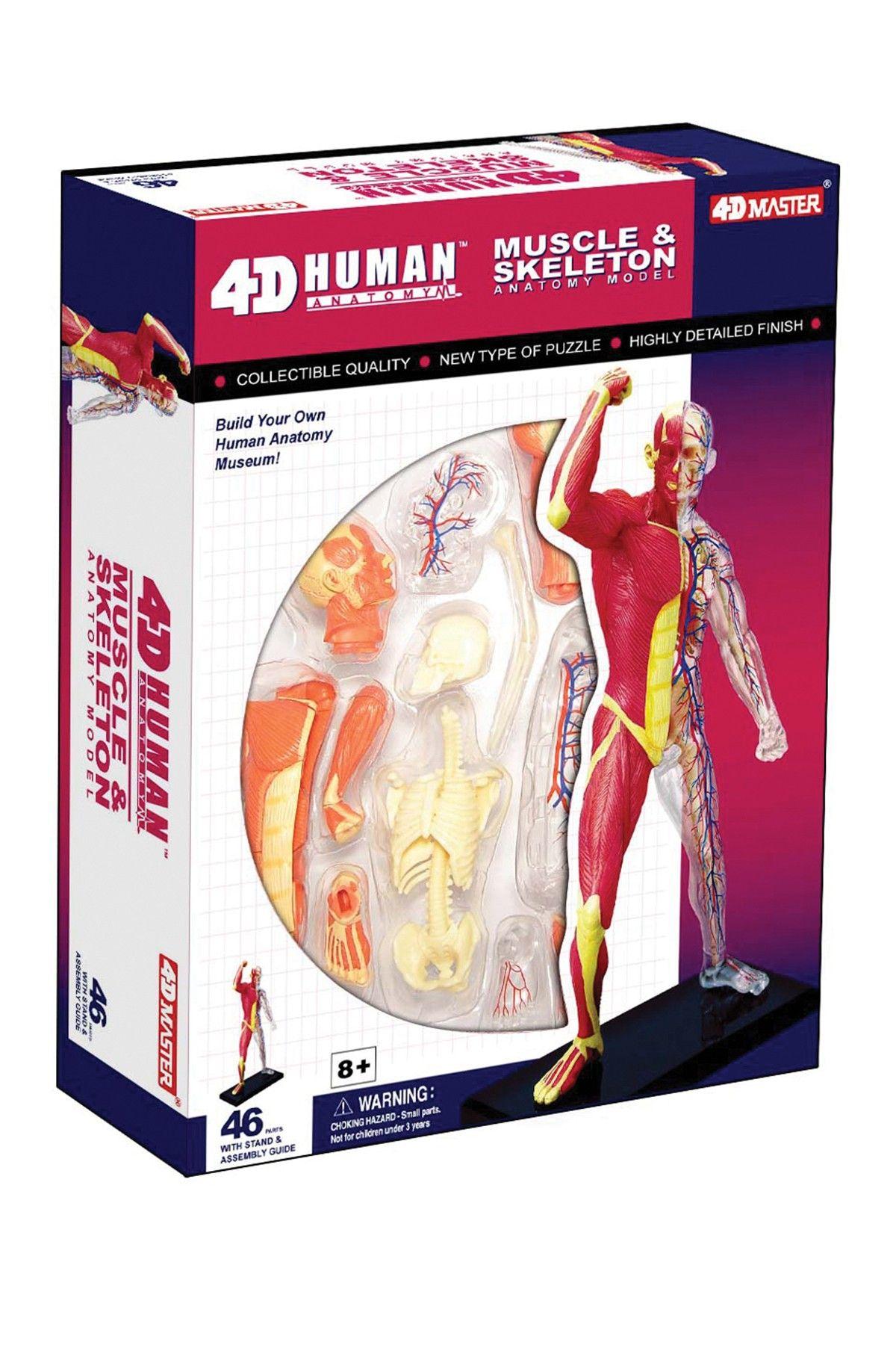 TEDCO Toys 4D Human Human Muscle & Skeleton Anatomy 46-Piece Set ...