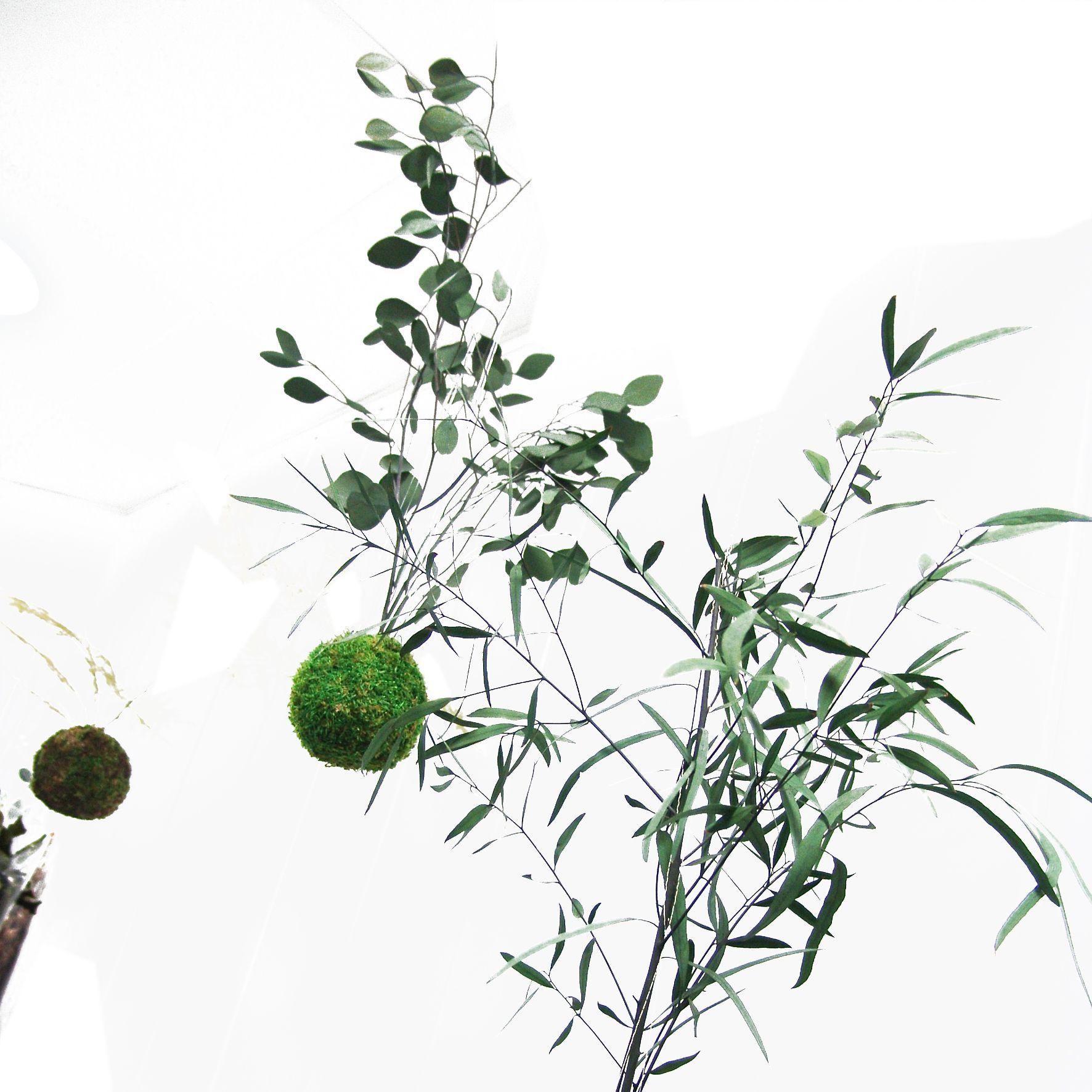 Kokedama. Design végétal, plantes stabilisées. Création et