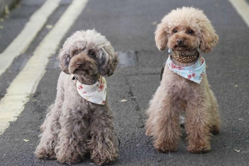 Apr 14 Paws 4 A Cause Pet Adoption Event Pet Adoption Pets