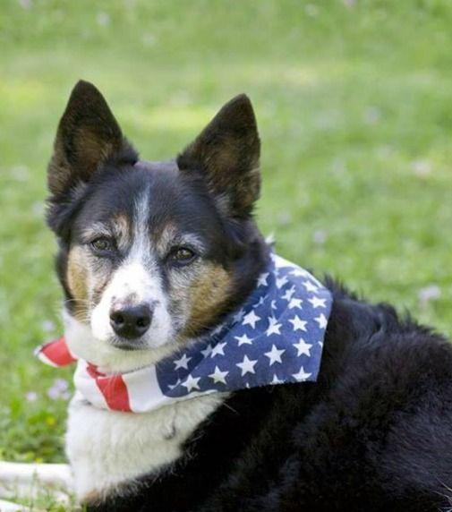 Pin By Pet Supplies Plus On Pet Clothes San Antonio Pet Clothes