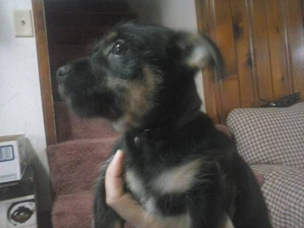 Another Craigslist Free To Good Home Dog Carrollton Ohio Dogs