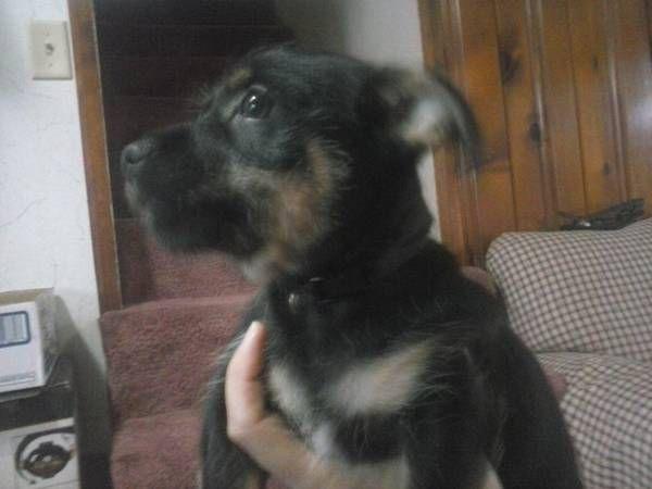 Another Craigslist Free To Good Home Dog Carrollton Ohio