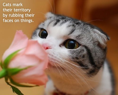 That is exactly what my kitty does...to my face :D <3